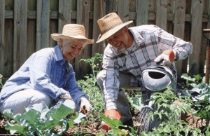 От уплаты каких налогов освобождаются пенсионеры