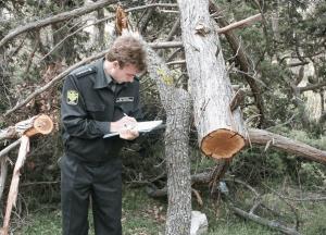 Рубка леса - экологическое преступление
