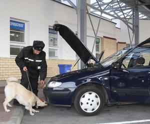 Досмотр авто с помощью собаки