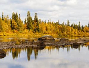 Лесной массив в водоохранной зоне