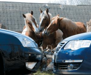 Расчет налога по лошадиным силам
