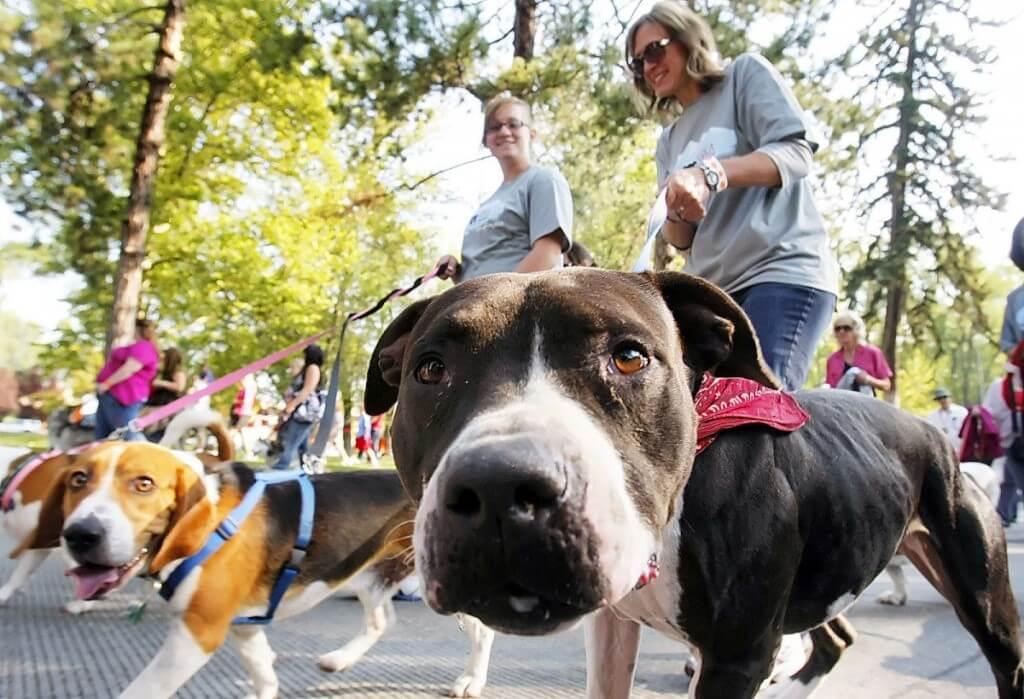 Допускается ли выгул собак на детской площадке