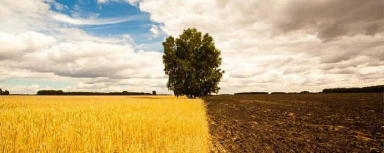 Разрешение на использование земельного участка без предоставления в собственность или установления сервитута и нюансы его получения